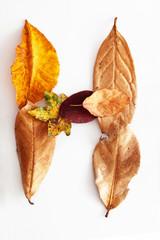 Herbstbuchstabe H