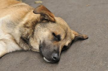 A stray dog sleeps on the pavement.