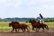 Leinwandbild Motiv horse riding