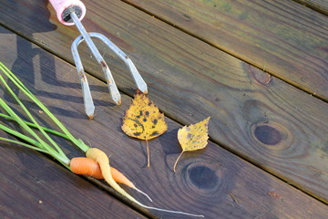 carrots tied together