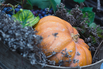 Beautiful still life composition of autumn products