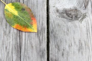 birnenblatt auf lärchenholz