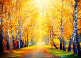 Fototapety Autumnal Park. Autumn Trees and Leaves in sun rays