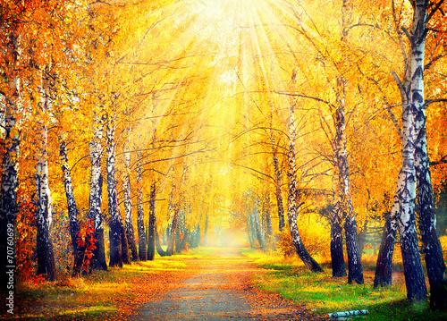 Zdjęcia na płótnie, fototapety na wymiar, obrazy na ścianę : Autumnal Park. Autumn Trees and Leaves in sun rays