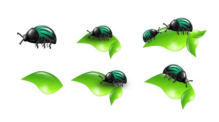Beetles on leaves