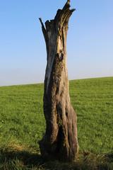Toter Baumstumpf
