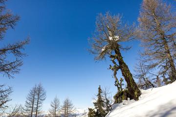 Panorama invernale di montagna