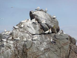 bird sanctuary at Seven Islands