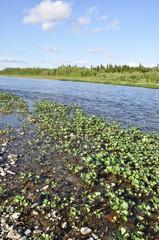Wild river landscape.