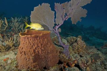Underwater Reef Sea Fan and Sea Sponge