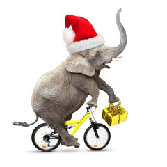 Elephant with santa's cap on a bike. Christmas gifts for all.
