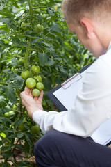 Head of the garden controlling tomatoes condition