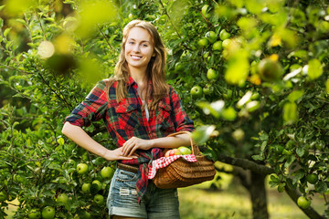 Young woman with basket full of ripe apples in a garden.