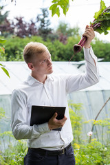 Garden expert checking beetroot condition