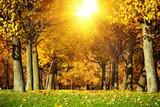 Autumn park background. Picturesque fall landscape.