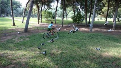 Niño espantado palomas con bicicleta