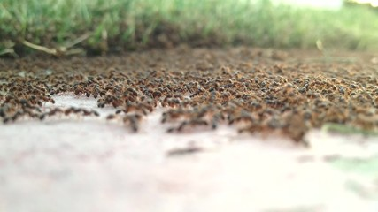 Timelapse of Ant Colony