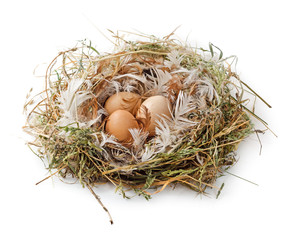 Eggs in the nest isolated