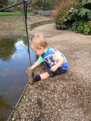 toddler boy putting gravel into puddle