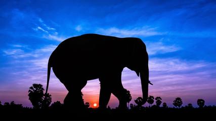 Elephant andpPalm tree on twilight time