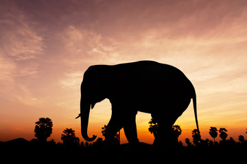 Elephant and plam tree on twilight time