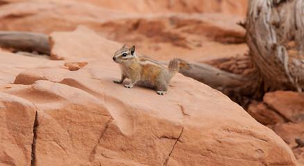 Curious little fellow