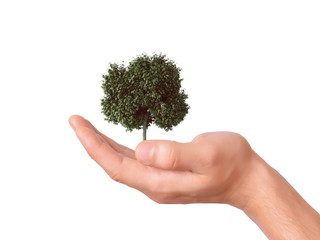 hand holding a tree with isolated background