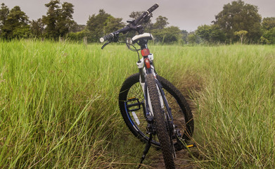 Bicycles and fields
