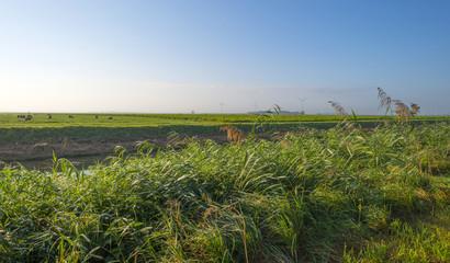 Sheep in a rural landscape at sunrise