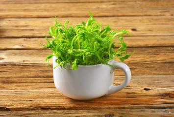 Green pea shoots