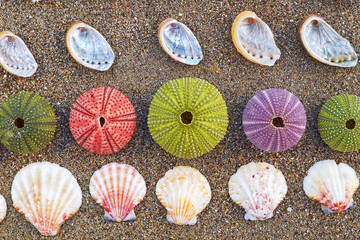 variety of colorful sea urchins and shells on the beach