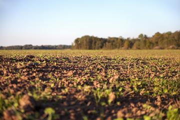 Fresh field.