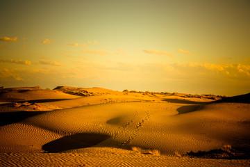 desert in sunset