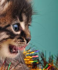 Christmas group portrait of kitten