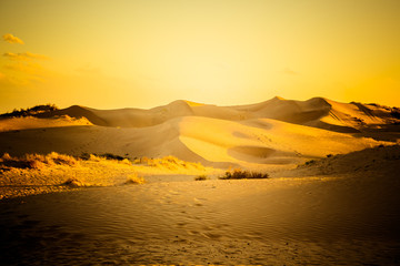 desert in sunset