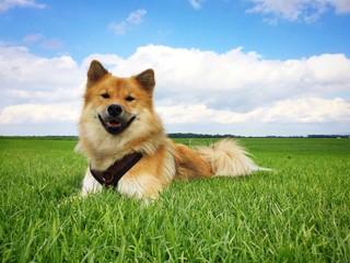 Hund im Gras