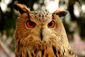 Owl's beautiful eyes