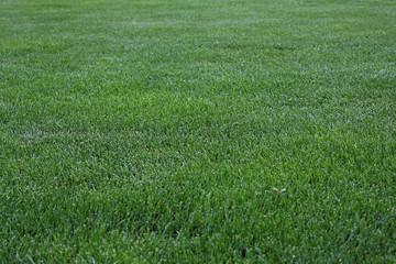 Green Cut Grass