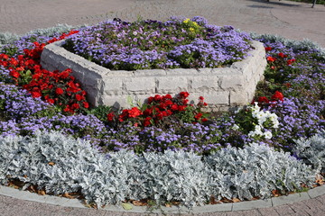 Bed of a stone with multi-colored flowers