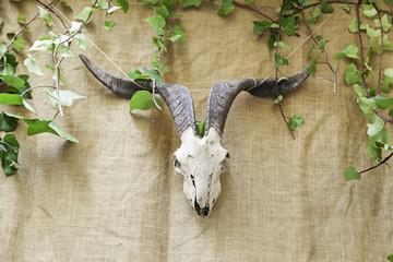 Animal Skull india