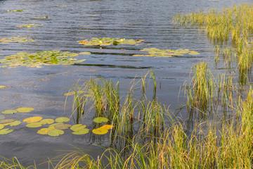 Loch Aboyne Shore