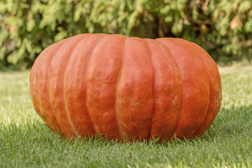 big red pumpkin