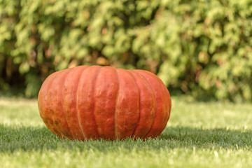 red pumpkin in autumn