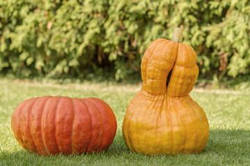 orange and yellow pumpkin