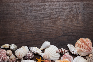 different seashells on the brown wooden background