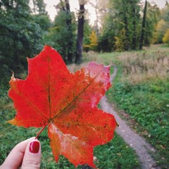 Bright red maple leaf in the hand on forest background