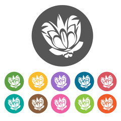 Lotus icon. Flower icon set. Round  colourful 12 buttons. Vector