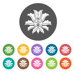 Peony icon. Flower icon set. Round  colourful 12 buttons. Vector