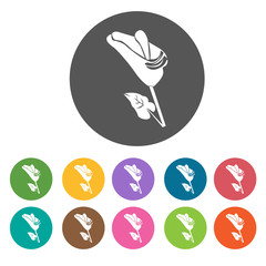 Calla lily icon. Flower icon set. Round  colourful 12 buttons. V