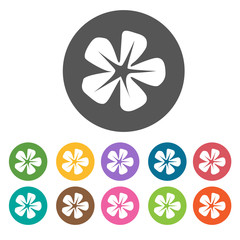 Holly icon. Flower icon set. Round  colourful 12 buttons. Vector